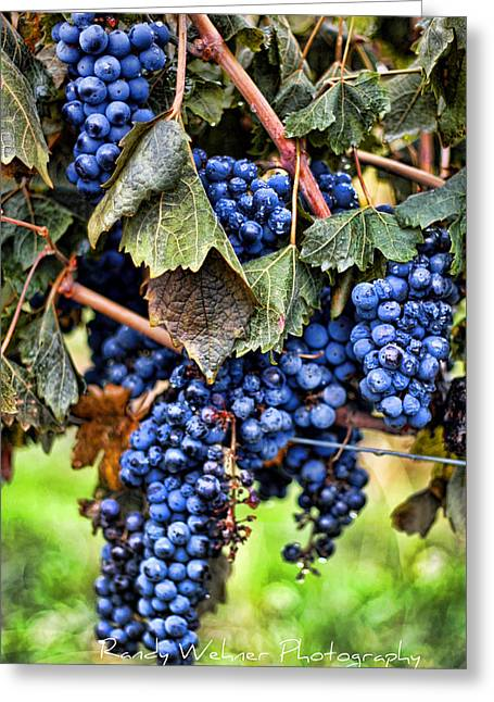 Vines And Clusters Greeting Card by Randy Wehner Photography