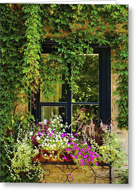 Vines Growing On A Wall And Flowers Greeting Card by David Chapman