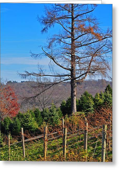 Vineyard In Fall Greeting Card by Peter  McIntosh