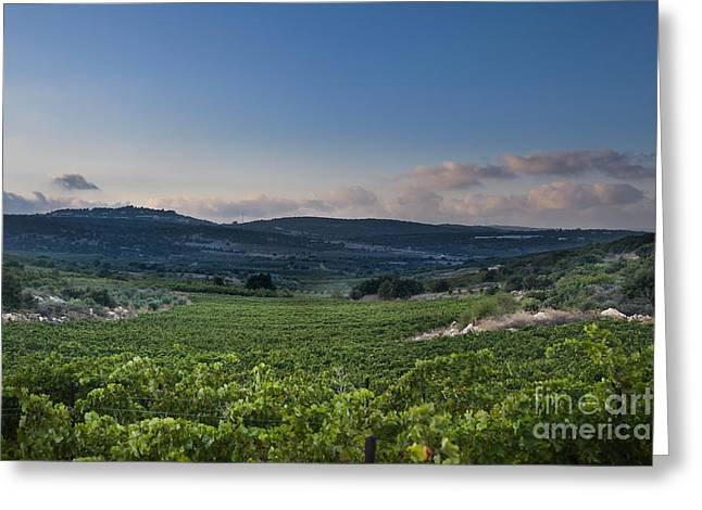 Vineyard In The Galilee Greeting Card by Noam Armonn
