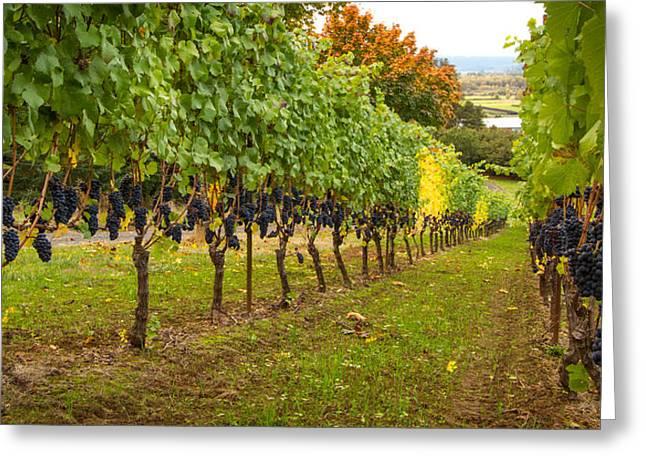 Vineyard Greeting Card by Jean Noren