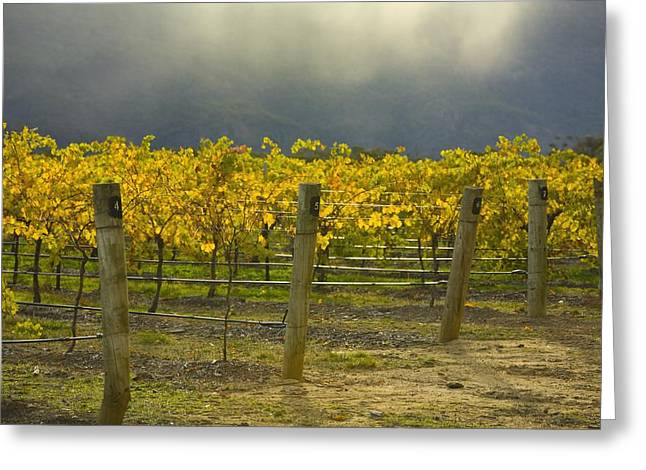 Vineyard Greeting Card by John Doornkamp