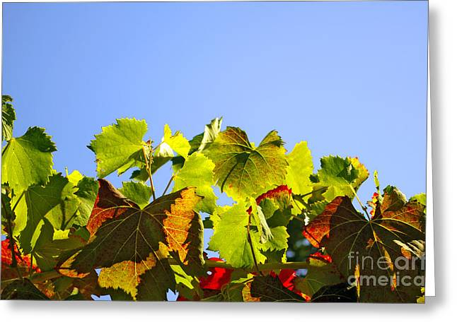 Vineyard Leaves Greeting Card