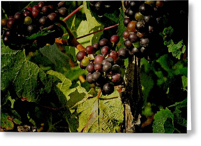 Vineyard No.1 Greeting Card