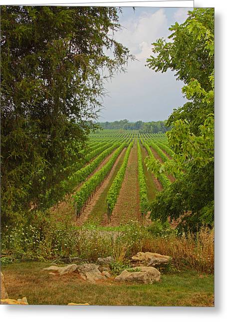 Greeting Card featuring the photograph Vineyard On The Bench by John Stuart Webbstock