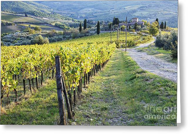 Vineyards And Farmhouse Greeting Card