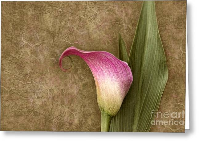 Greeting Card featuring the photograph Vintage Calla Lily by Cheryl Davis