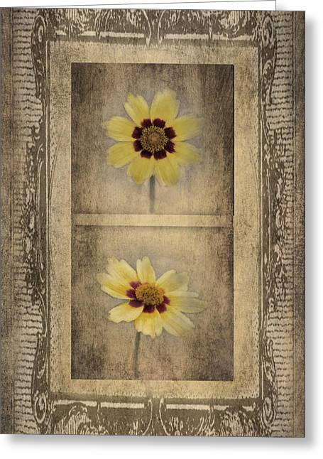 Vintage Coreopsis Greeting Card by Betty LaRue