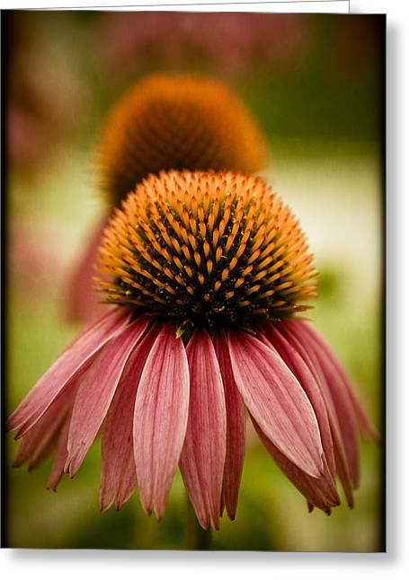 Vintage Flower Greeting Card by Jen Morrison