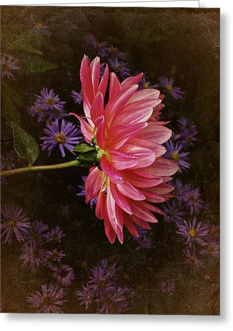 Vintage October Dahlia Greeting Card by Richard Cummings