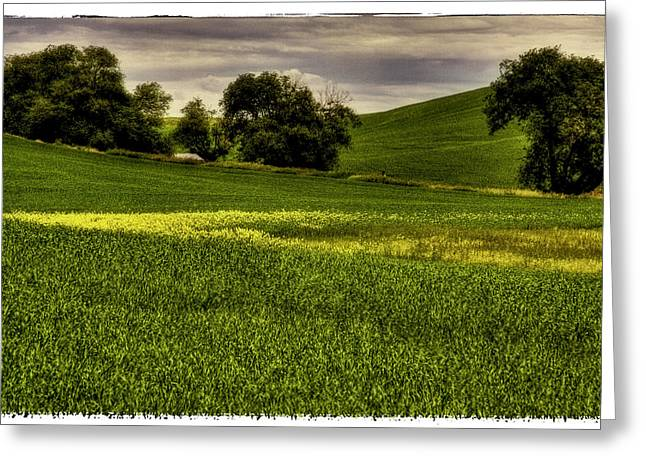 Vintage Palouse Country Greeting Card by David Patterson