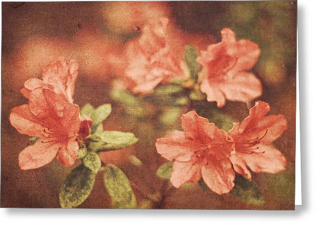 Vintage Pink Azaleas Greeting Card by Mary Hershberger