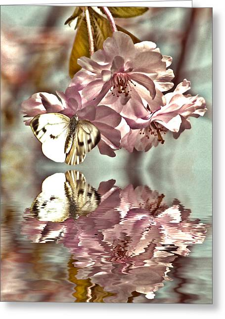 Vintage Reflections Greeting Card by Sharon Lisa Clarke