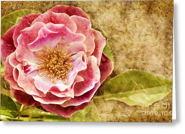 Greeting Card featuring the photograph Vintage Rose by Cheryl Davis