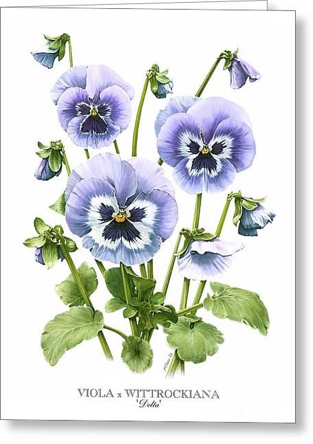 Viola Pansies Greeting Card
