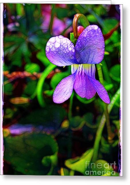 Violet With Dew Greeting Card by Judi Bagwell