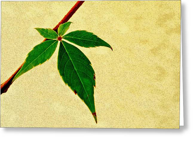 Virginia Creeper Greeting Card by Laura DAddona