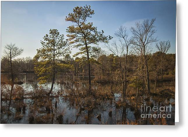 Greeting Card featuring the photograph Virginia Swamp by Jim Moore
