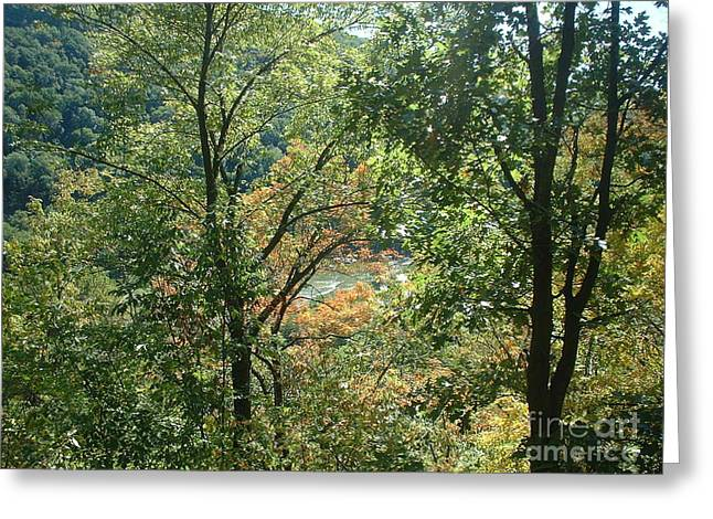 Virginia Walk In The Woods Greeting Card