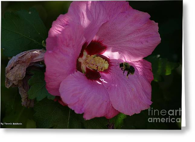 Greeting Card featuring the photograph Visiting Bee by Tannis  Baldwin