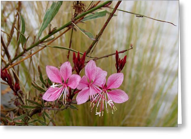 Visiting The Pink Guara Greeting Card