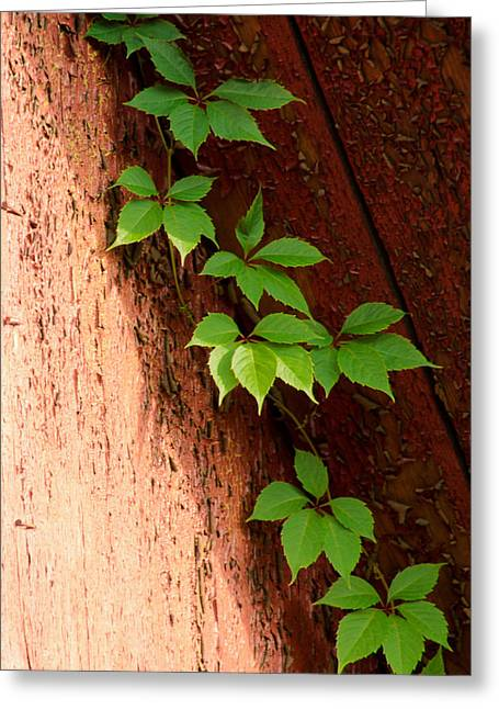 Vitis Greeting Card