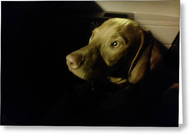 Vizsla In The Shadows Greeting Card by Brittany Roth