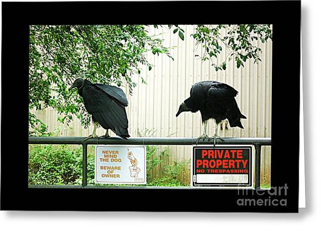 Greeting Card featuring the photograph Vultures Guarding Property by Renee Trenholm