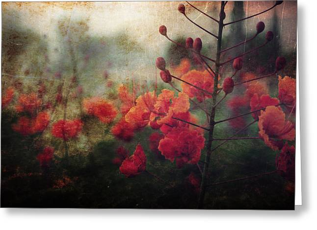 Waiting For Better Days Greeting Card by Laurie Search