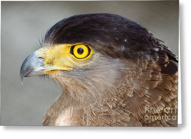 Greeting Card featuring the photograph Waiting For Prey  by Fotosas Photography