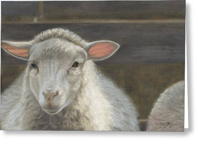 Waiting For The Shepherd Greeting Card