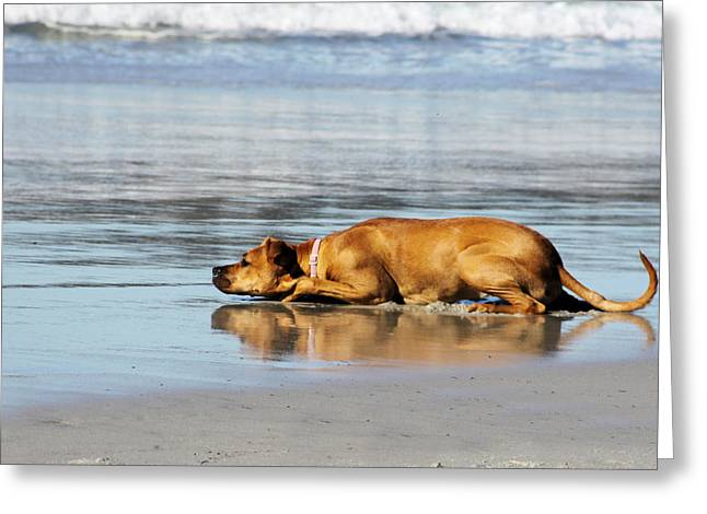 Waiting For The Wave Greeting Card by Renae Laughner