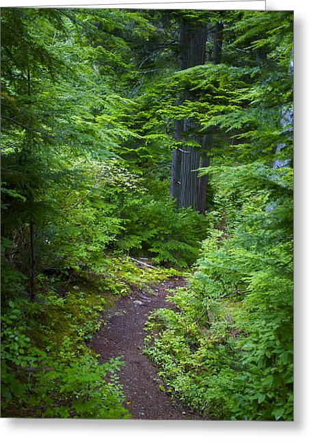 Greeting Card featuring the photograph Walk In The Forest by Sylvia Hart