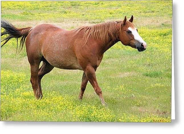 Walking Horse Greeting Card