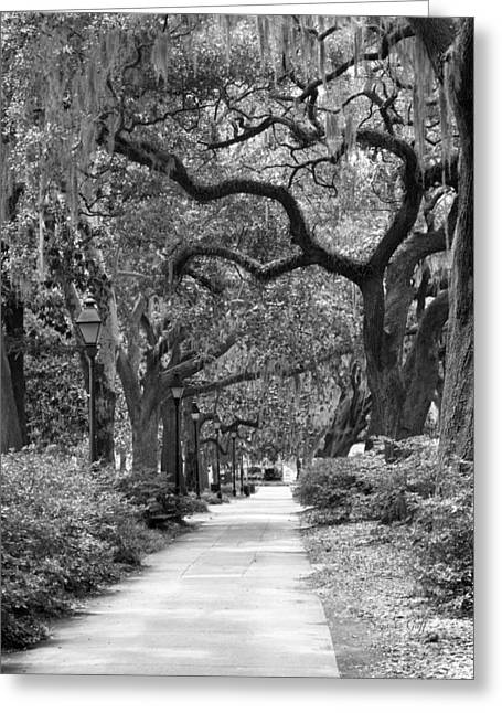 Walking Through The Park In Black And White Greeting Card
