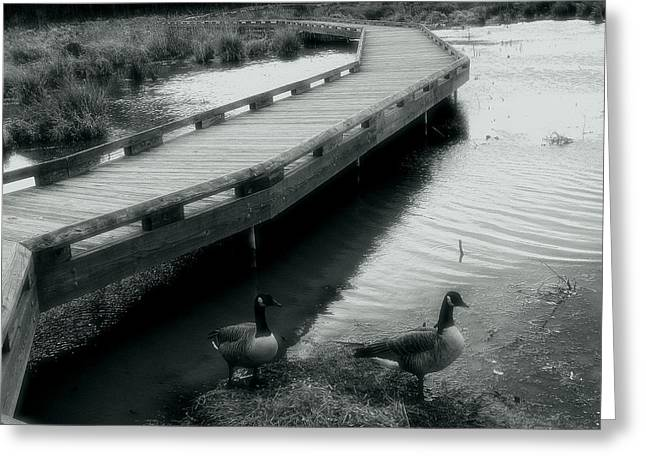 Walkway And Geese Greeting Card