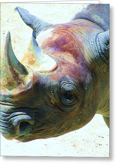 Warhol Rhino Greeting Card by Todd Sherlock