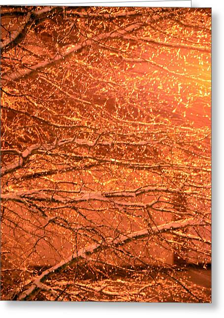 Warm Icy Reflections Greeting Card by Sandi OReilly