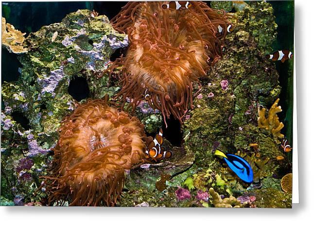 Warm Water Reefs Wil 257 Greeting Card