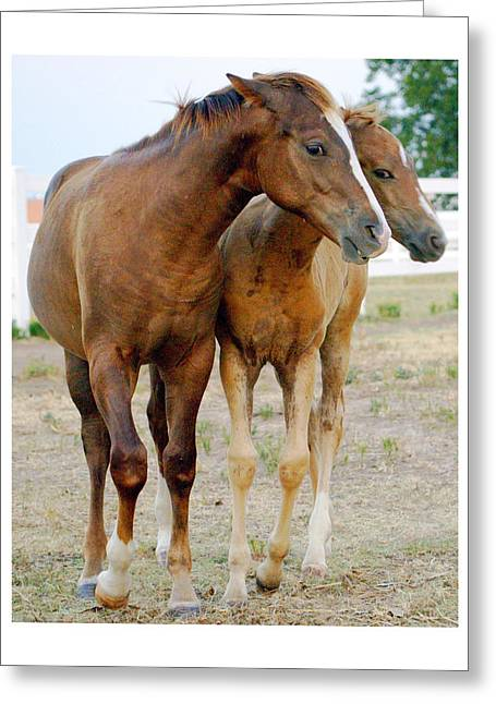 Wary Young Horses Greeting Card