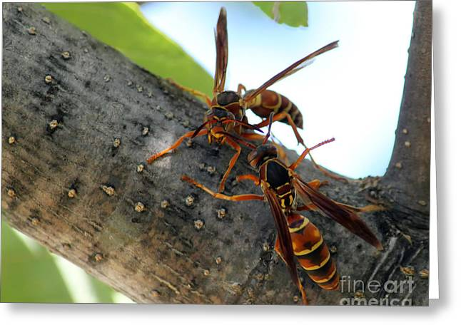 Wasp Fight Greeting Card by Billie-Jo Miller