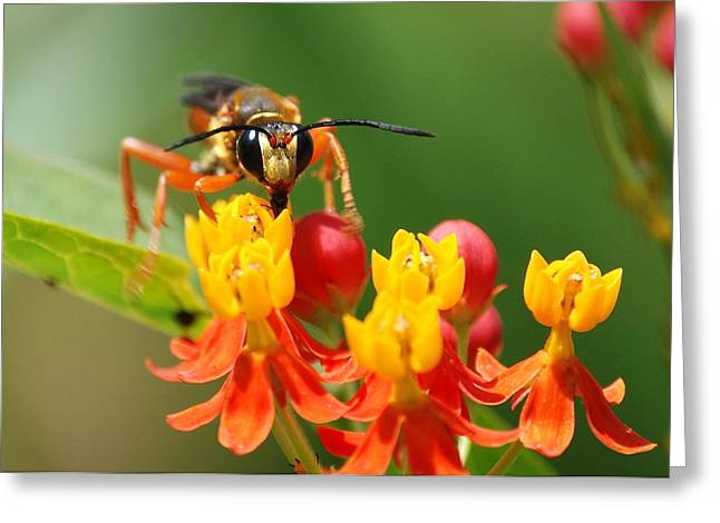 Wasp Greeting Card by Kathy Gibbons
