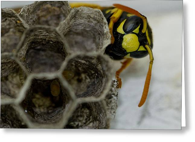 Wasp Nest Greeting Card by Dean Bennett