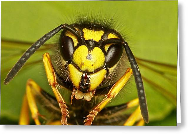 Wasp - Portrait Greeting Card by Ronald Monong