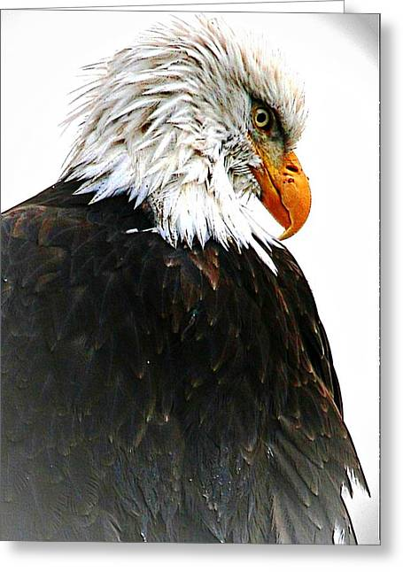 Watching Over You Greeting Card by Carrie OBrien Sibley