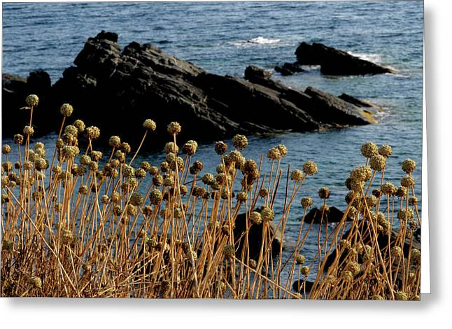 Greeting Card featuring the photograph Watching The Sea 1 by Pedro Cardona