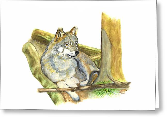 Watching Wolf Greeting Card by Peter Edward Green