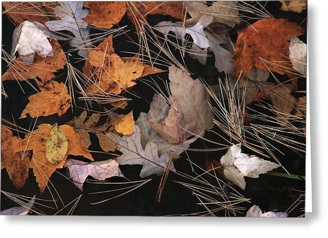 Water And Leafs  Greeting Card by Mike Stouffer