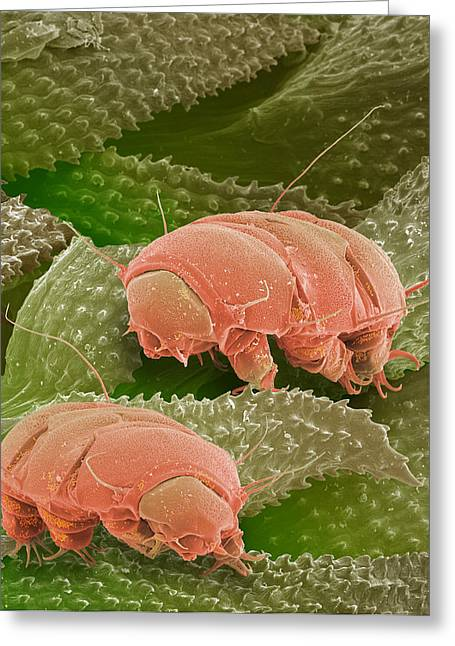 Water Bears, Sem Greeting Card by Power And Syred