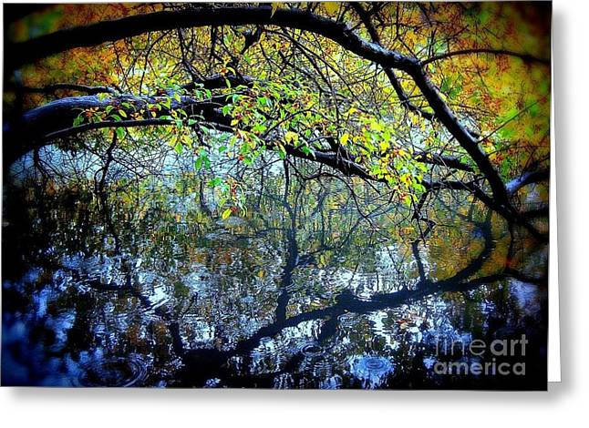 Water Cove Greeting Card by Maria Scarfone